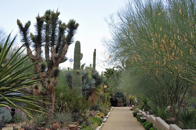 Springs Preserve, Las Vegas. Image: Andrew, CC.
