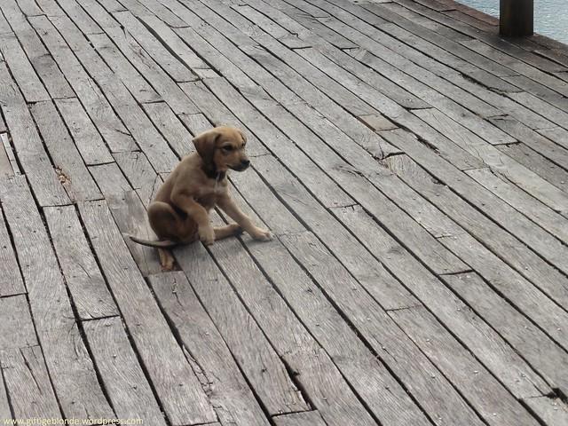 Babyhund