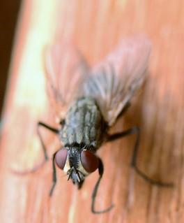 Fly 18 (3)
