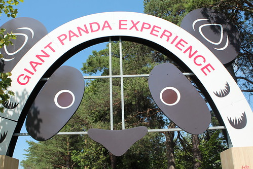Giant Panda Experience