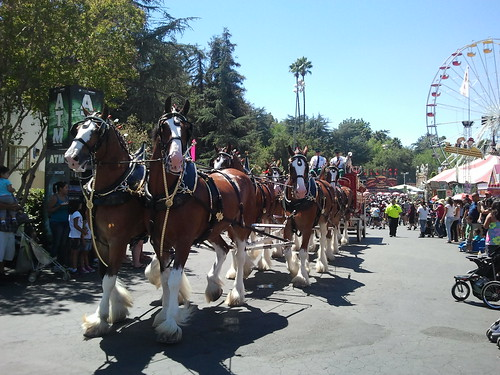 Clydesdales on parade | by s myrland