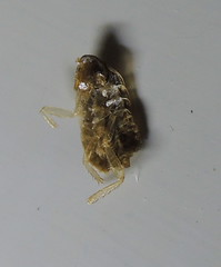 Image Result For Bed Bug Trapa