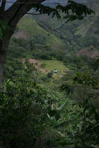 A view from top to bottom of Finca La Paz. | by Dallis Bros. Coffee