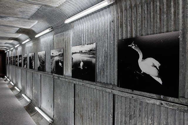永瀬正敏《3.11 TOHOKU SWAN》(2016) 震災後に、東北各地を巡っている途中、白鳥の飛来を見て一筋の希望を見出した作品。