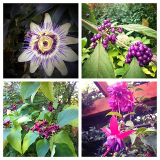 Blooms and berries in the late October garden. So much color. Grateful. | by Lelonopo