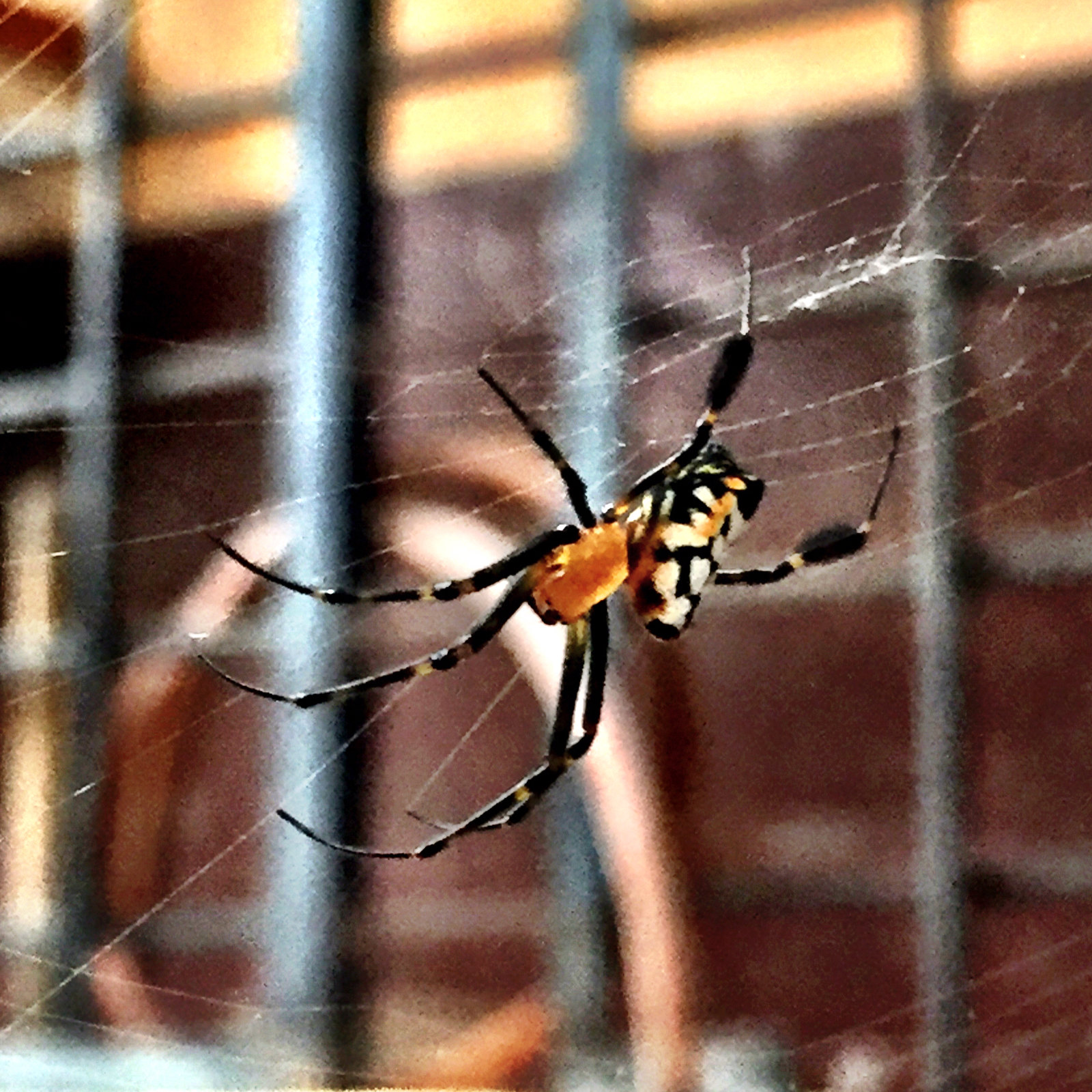 Spider... pear shaped leucauge.