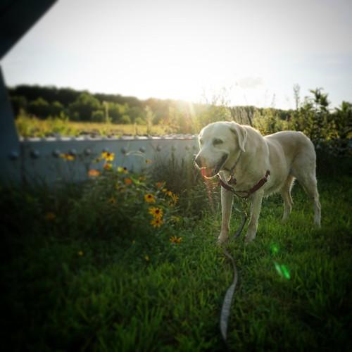 Daisy along the river