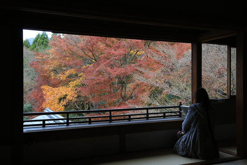 Autumn Rurikouin 瑠璃光院