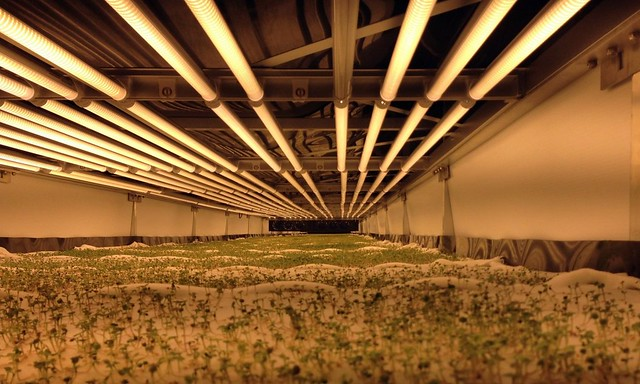 a sprawling indoor farm
