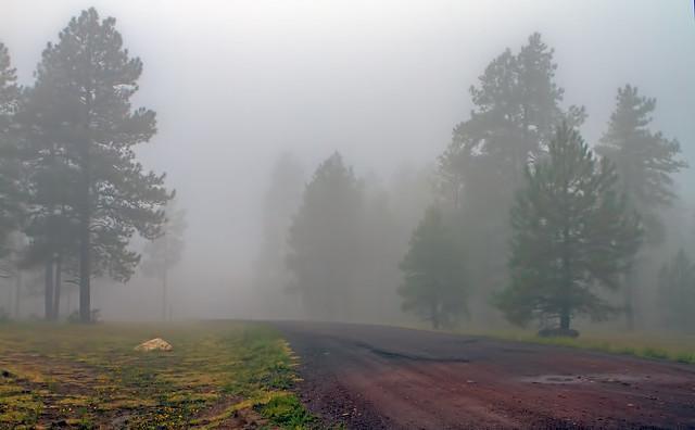 Fog-4-7D1-_092216