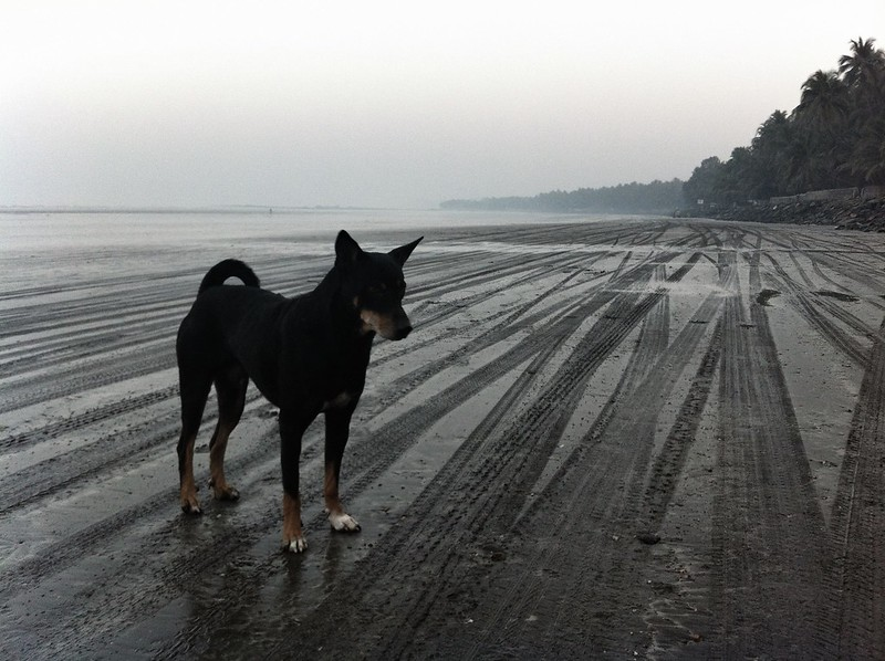 Dog on Gorai Beach