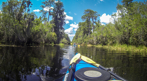 Lowcountry Unfiltered at Okefenokee-81