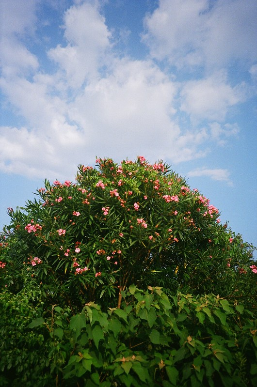 flowers&blue sky