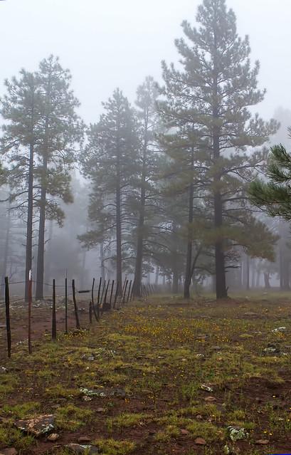 Fog-6-7D1-_092216