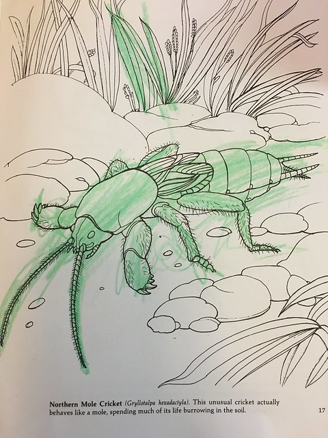 2016 Summer of Bugs