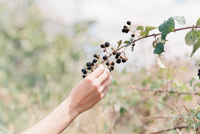 Blackberries_14