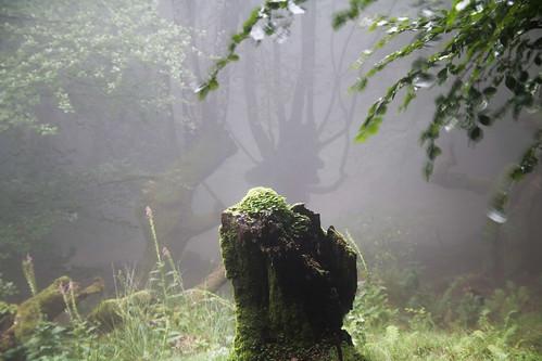 Parque Natural de #Gorbeia #DePaseoConLarri #Flickr - -851