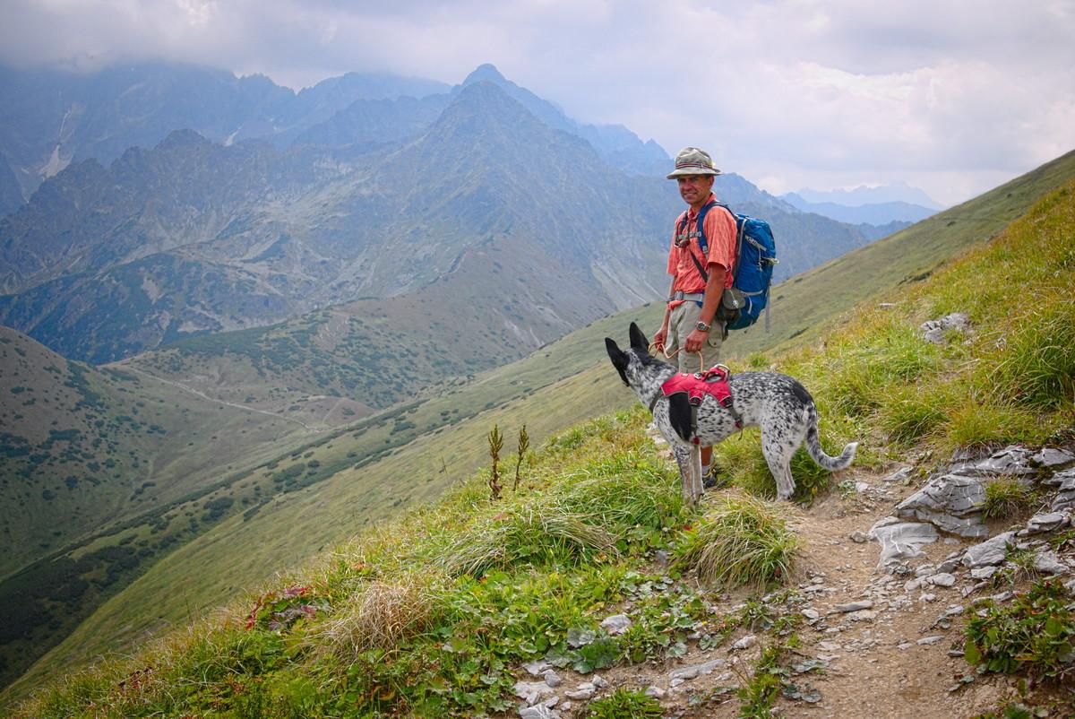 tatry pies 2000 metrów