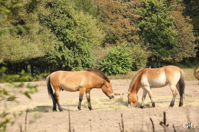 Tierpark Friedrichsfelde 25.09.1653