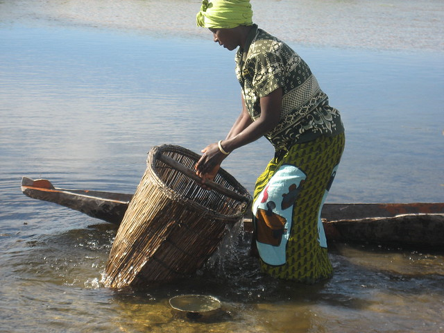 Fishing with fishing basket in Matongo fishing camp, Zambia. Photo by Kate Longley, 2013.