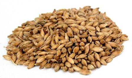 Malted_Barley