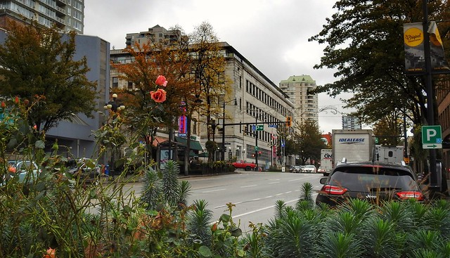 Columbia St. In October