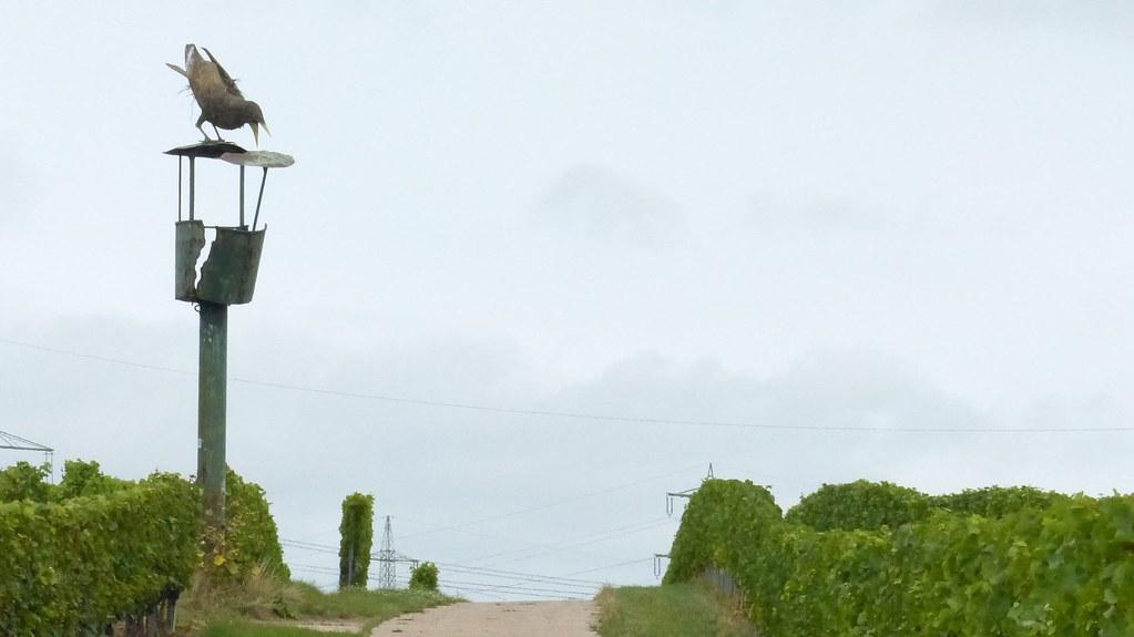 Ausguck in den Weinbergen zwischen Worms und Osthofen
