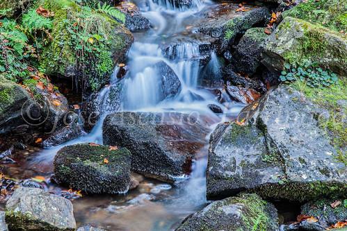 Parque Natural de #Gorbeia #DePaseoConLarri #Flickr      -1439