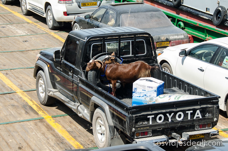transporte de cabras en el ferry de Masirah