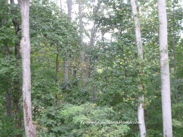 September Forest 3