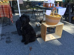 honey at farmers market IMG_8179