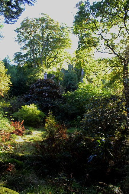 Ardkinglas Woodland Garden, Argyll, Scotland.