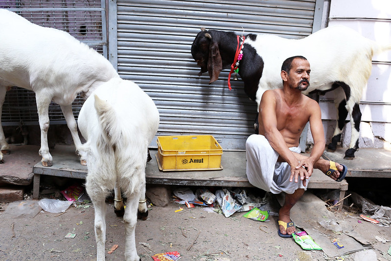 City Faith - The Ballad for the Eid Goats, Old Delhi