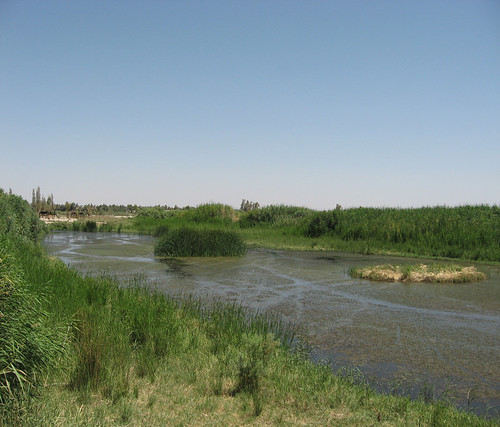 Image_12: Wetlands/reserve in Azraq, Jordan_2009. Credit: Jessica Hoskins.