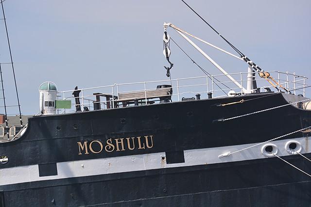 Moshulu fo'c'slehead