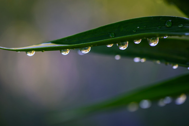 2016 07 05 Water Drops 004