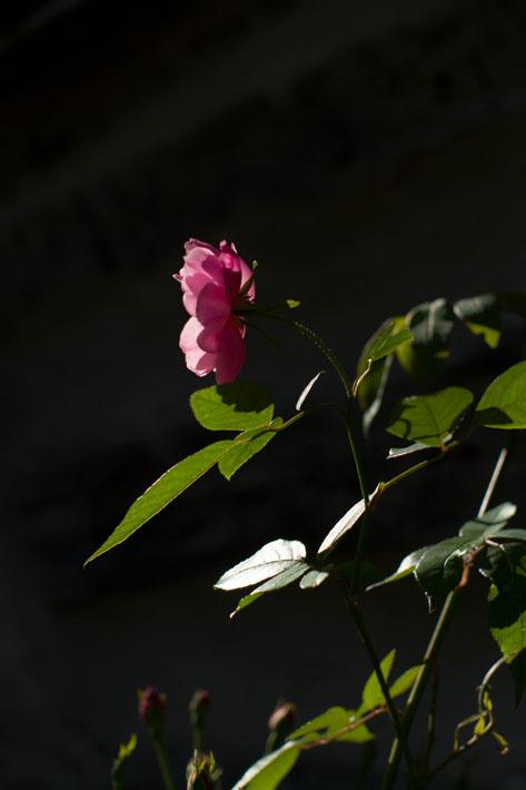112315_garden43