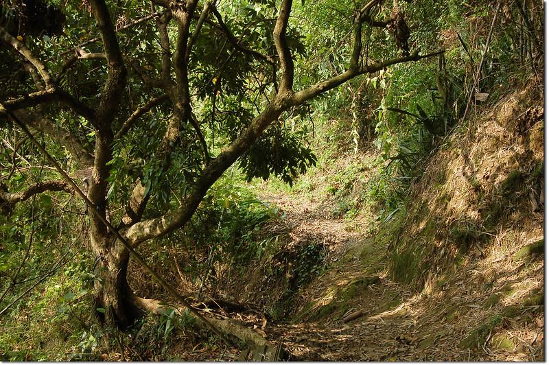 牛牡嶺登山小徑 2
