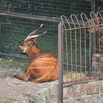 South African deer :-)