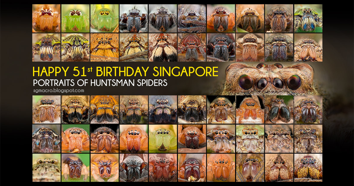 51 Huntsman Spider Portraits from Singapore - Happy 51st Birthday Singapore!