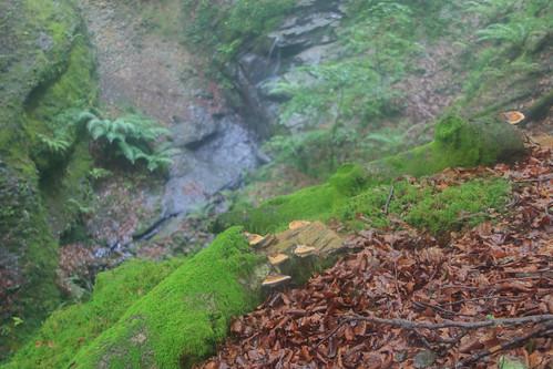 Parque Natural de #Gorbeia #DePaseoConLarri #Flickr - -871