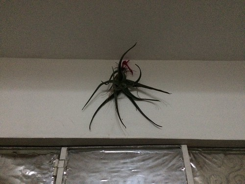 Not a spider
