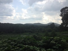 Kudzu and Mountains