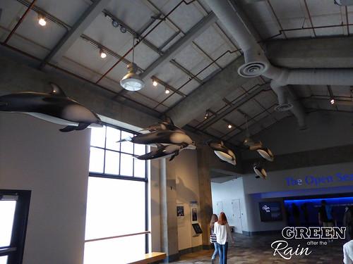 160703f Monterey Bay Aquarium _012