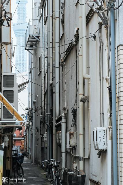 初夏,東京遊拍 | 30