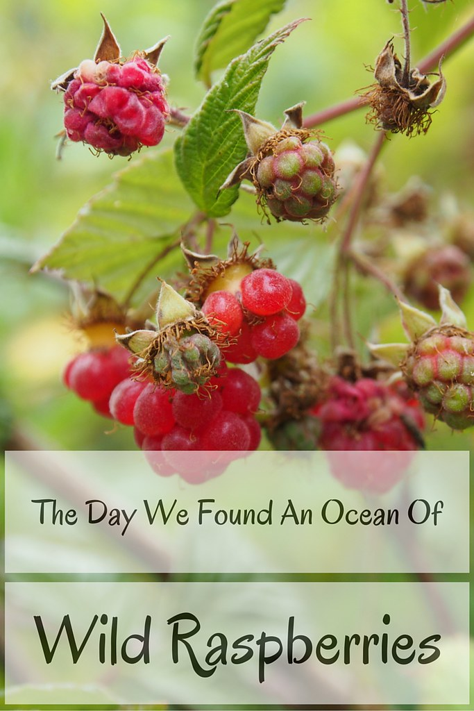 The Day We Found An Ocean Of Wild Raspberries | Live now – dream later travel blog