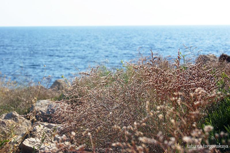 Растительность на скалистом берегу