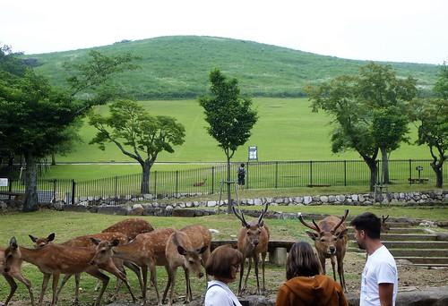 jp16-Nara-j1-Kasuga Taisha (2)