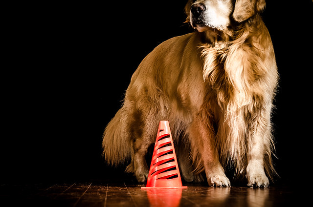 Dog and Cone
