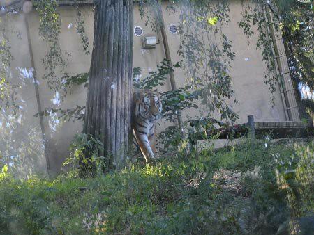 zoo helsinki obiective turistice 6